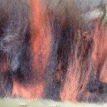 Lammwolle des drunter Schafs gemischt mit Merinowolle.