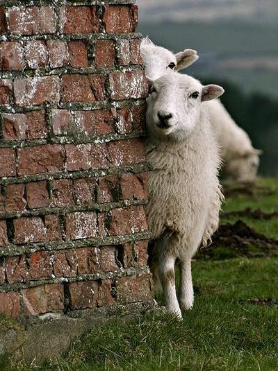 Wollwerke ist ein Atelier für individuelle Produktion von Produkten aus handgesponnenen Wolle bester Qualität: Schafwolle, Merinowolle, andere Wolle.