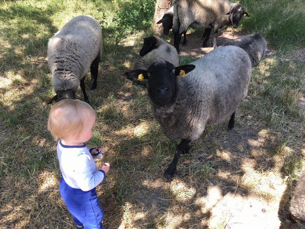 Bekleidung aus Schafwolle, Merinowolle, Wolle